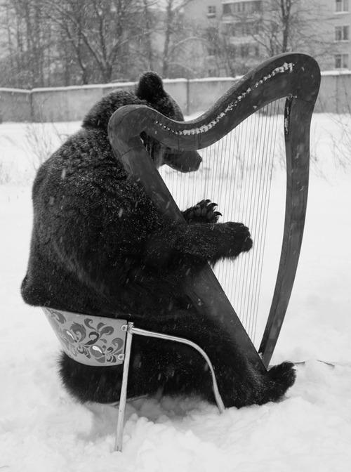 ours-et-harpe